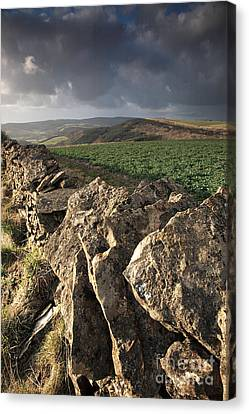 Dry Stone Wall View Canvas Print by Deborah Benbrook