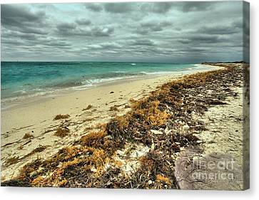 Dry Tortugas Beach Canvas Print by Adam Jewell