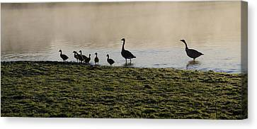 Duck Family Panorama Canvas Print by Bill Cannon