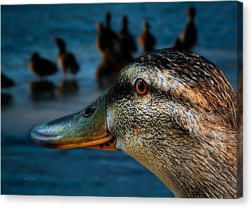 Duck Watching Ducks Canvas Print by Bob Orsillo