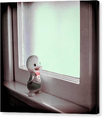 Duckie At The Window Canvas Print by Yo Pedro