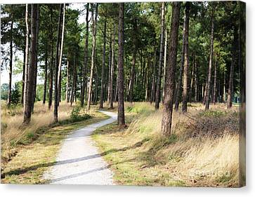 Dutch Country Bicycle Path Canvas Print by Carol Groenen