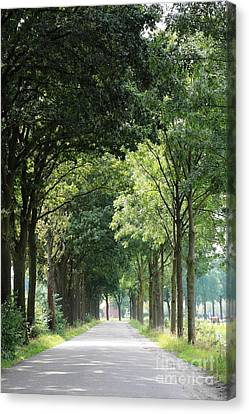 Dutch Landscape - Country Road Canvas Print by Carol Groenen
