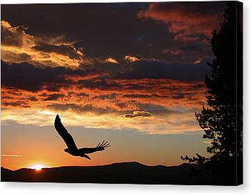Eagle At Sunset Canvas Print by Shane Bechler