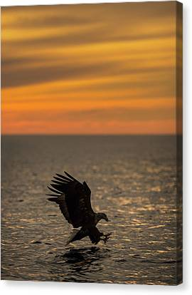 Eagle Hunting At Sunset Canvas Print by Andy Astbury
