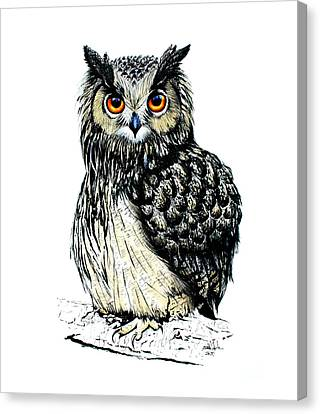 Eagle Owl Canvas Print by Isabel Salvador