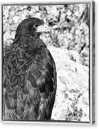 Eagle Canvas Print by Jose Elias - Sofia Pereira