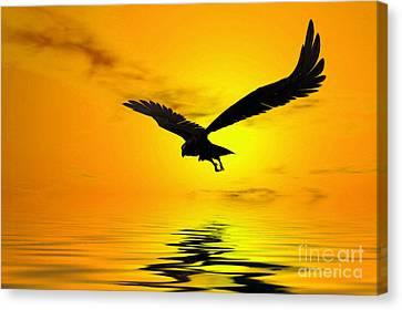 Eagle Sunset Canvas Print by John Edwards