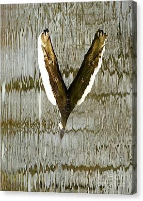 Eagle Wings Canvas Print by Marcia Lee Jones