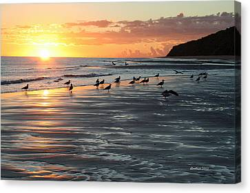 Early Birds Canvas Print by Dick Botkin