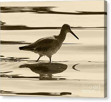 Early Morning In The Moss Landing Harbor Picture Of A Willet Canvas Print by Artist and Photographer Laura Wrede