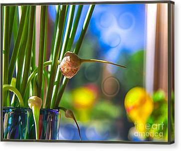 Early Morning Magic Canvas Print by Omaste Witkowski