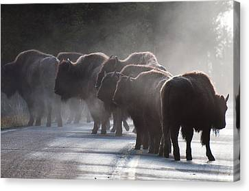 Early Morning Road Bison Canvas Print by Bruce Gourley