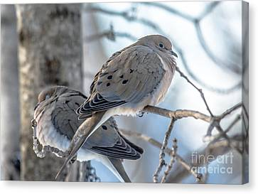 Early Mourning Canvas Print by Cheryl Baxter