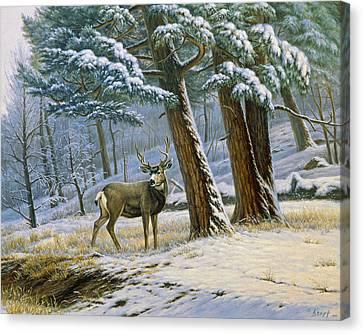 Early Snow- Mule Deer Canvas Print by Paul Krapf