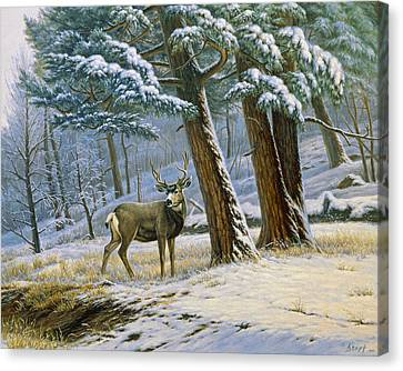 Early Snow- Mule Deer Canvas Print by Paul Krapf