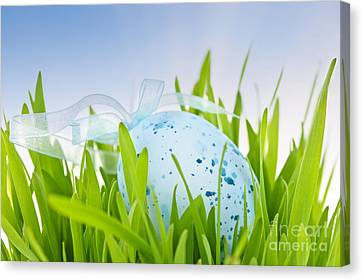 Easter Egg In Grass Canvas Print by Elena Elisseeva