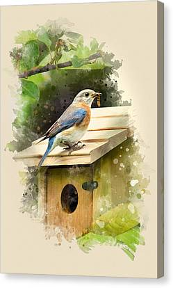 Eastern Bluebird Watercolor Art Canvas Print by Christina Rollo