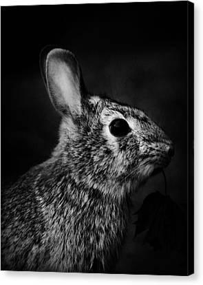 Eastern Cottontail Rabbit Portrait Canvas Print by Rebecca Sherman