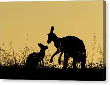 Eastern Grey Kangaroo And Joey Mount Canvas Print by Sebastian Kennerknecht