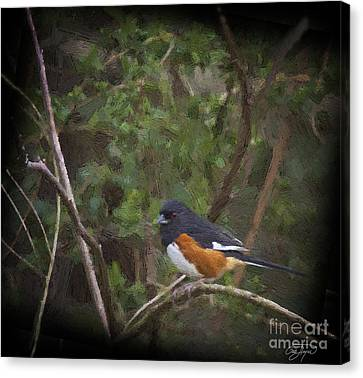 Eastern Towhee In Oil Canvas Print by Cris Hayes