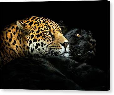 Ebony And Ivory Canvas Print by Pedro Jarque