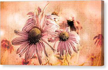 Echinacea Impressions  Canvas Print by Bob Orsillo
