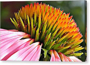 Echinacea In  Watercolors  Canvas Print by Chris Berry