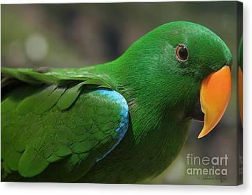 Eclectus Roratus Canvas Print by Sharon Mau