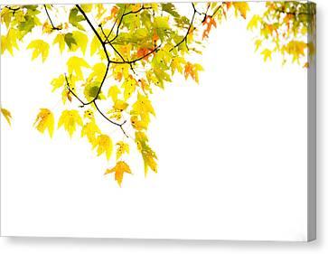 Edge Of The Season Canvas Print by Karol Livote