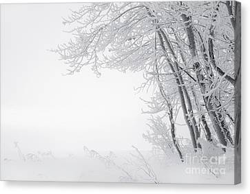 Edge Of Winter Canvas Print by Dan Jurak