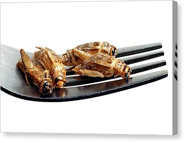 Edible Insects Canvas Print by Victor De Schwanberg