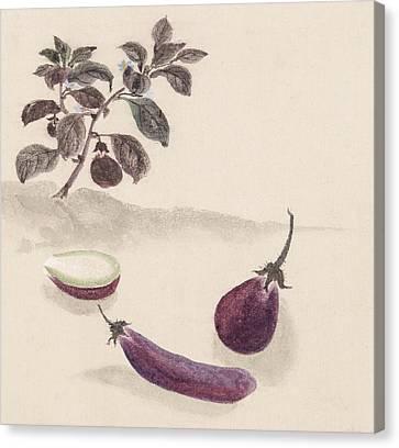 Eggplants Canvas Print by Aged Pixel
