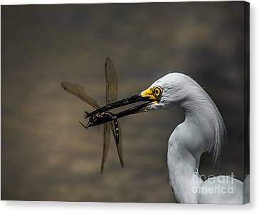 Egret And Dragonfly Canvas Print by Robert Frederick
