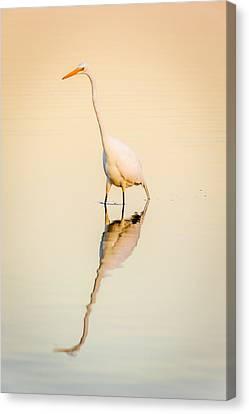 Egret At Dusk Canvas Print by Chris Modlin