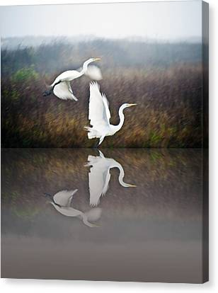 Egrets In The Fog Canvas Print by John Collins