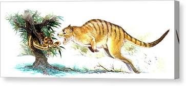 Ekaltadeta Prehistoric Rat-kangaroo Canvas Print by Deagostini/uig