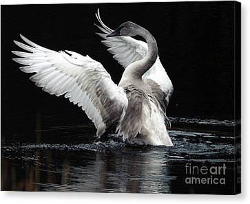 Elegance In Motion 2 Canvas Print by Sharon Talson