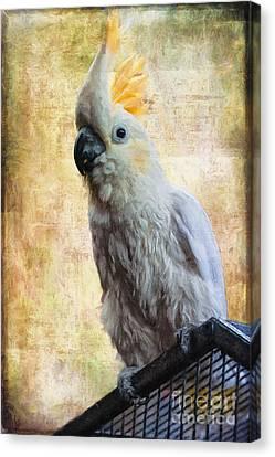 Elegant Lady Canvas Print by Lois Bryan