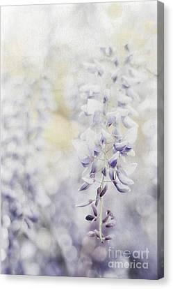 Elegant Wisteria Canvas Print by Darren Fisher