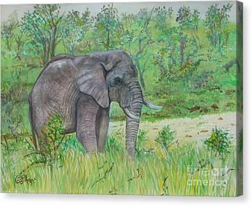 Elephant At Kruger Canvas Print by Caroline Street