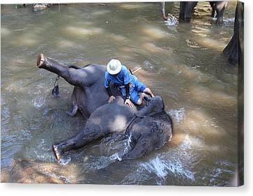 Elephant Baths - Maesa Elephant Camp - Chiang Mai Thailand - 011310 Canvas Print by DC Photographer