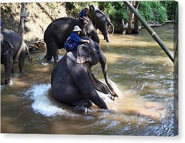 Elephant Baths - Maesa Elephant Camp - Chiang Mai Thailand - 011314 Canvas Print by DC Photographer