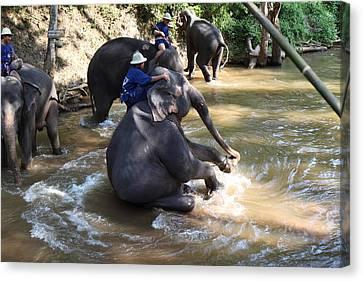 Elephant Baths - Maesa Elephant Camp - Chiang Mai Thailand - 011315 Canvas Print by DC Photographer