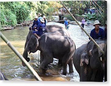 Elephant Baths - Maesa Elephant Camp - Chiang Mai Thailand - 01132 Canvas Print by DC Photographer