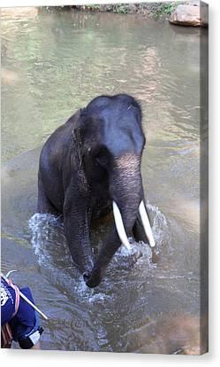 Elephant Baths - Maesa Elephant Camp - Chiang Mai Thailand - 011327 Canvas Print by DC Photographer