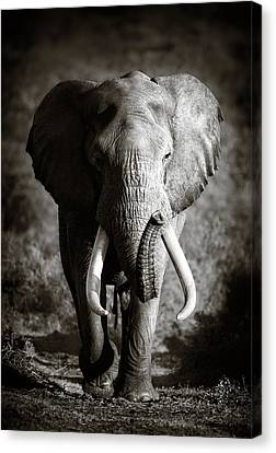 Elephant Bull Canvas Print by Johan Swanepoel