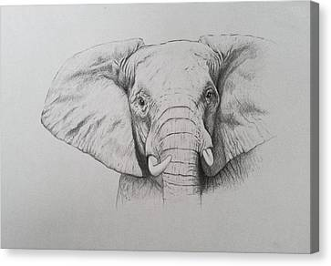 Elephant Canvas Print by Ele Grafton