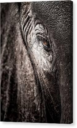 Elephant Eye Verical Canvas Print by Mike Gaudaur