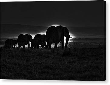Elephant Family Canvas Print by Aidan Moran